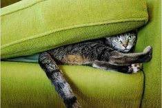 Cats love smooshing themselves into dark places. Here are some cats smooshing into sofas.