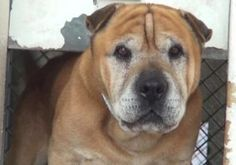 Pet Rescue Report 11-year-old friendly dog dumped at shelter for no reason  Butter the dog