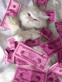 Wallpaper pink aesthetic glitter kitty white furry dollars pink dollar cat Bougie rhinestone iPhone background