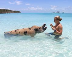 Pig Beach, Exuma, Bahamas — beaches, booze, and bungalows Bahamas Honeymoon, Bahamas Beach, Exuma Bahamas, Bahamas Vacation, Pig Beach, Beach Fun, Vacation Places, Vacation Trips, Pig Island