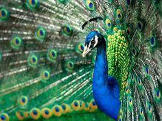 Aves ImagenesGratis.com