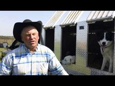 Training Cattle Dogs - YouTube