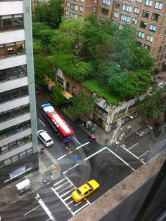 Rooftop garden! NYC.