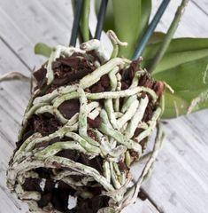 Indoor Garden, Indoor Plants, Special Flowers, Beautiful Gardens, Herbs, Green, Bra Tips, Cream Pies, Gardening