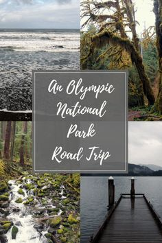 Wander wild beaches, hike through dense mossy rainforest, climb snow capped mountains and enjoy the best views on an Olympic National Park road trip. Washington State   USA   Travel   Olympic National Park . Read more at www.liverecklessly.com