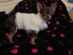 Crochet Sweater: can be ordered for any size pet. Please contact me through pinterest messenger or through the Choly's Closet facebook page. Thanks!