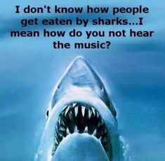 Some People Can Be So Dumb funny lol humor funny pictures funny photos funny images hilarious pictures Funny Pictures Tumblr, Funny Images, Funny Shark Pictures, Scary Music, The Meta Picture, Lol, Great White Shark, Funny People, Funny Posts