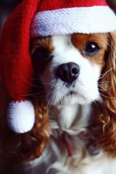 Santa Dog and 29 other Christmas iPhone Wallpapers to Cheer You Up