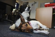 Chloe with her pal, Tilly.