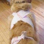 Bandage Dog Thunder Shirt
