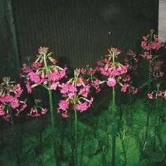 Flower power  . . . #flower #flowers #nature #naturelovers #beautiful #filmphotography #film #vsco #vsconature #instanature #plants #wildflowers #green by im_snowgirl