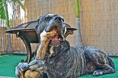 "From "" I Love My Cane Corso """
