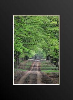 Tree Lined Dirt Road Photograph. Road Not Taken by NJSimages
