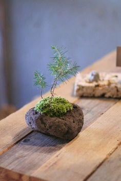 Ikebana, Mini Bonsai, Moss Garden, Paludarium, Garden Terrarium, Japanese Flowers, Plantation, Plant Design, Exotic Flowers