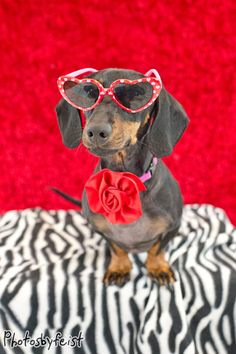 """Inspiration drawn from Andy Warhol in this """"Pop Art"""" kind of Valentine dog rendition.#valentines #dogs #dashchunds"""