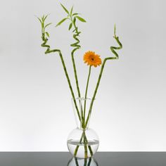 Il vaso che oltre all'acqua dà sostegno ai tuoi fiori! Esalta lo stelo dei fiori recisi ed è perfetto con i rami di bambù. Arreda il tuo salotto con una proposta fresca e innovativa! Realizzato dal designer Massimo Lunardon, lo trovi su http://lovli.it/index.php/bouchet.html#