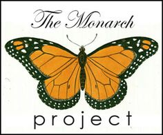 TRULY amazing video of a monarch emerging from a chrysalis. | The Art of Doing Stuff