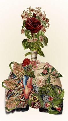 "I love all of these illustrations. ""inhale life - exhale love"" anatomical collage art by bedelgeuse"
