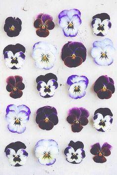 xx flowers - iPhone 5 Wallpaper