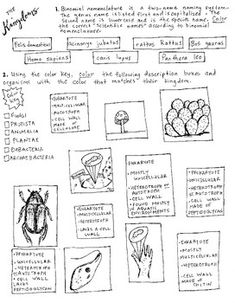 Homeostasis coloring sheet EOC Biology and other
