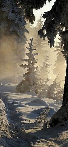 Winter Trail - Ottawa, Canada http://awesome-canada.com/ #winter #Canada #nature