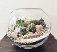 Terrarium dans un bocal sphérique en verre