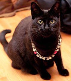 Helloooo kitty.  http://thecoveteur.com/Animals#