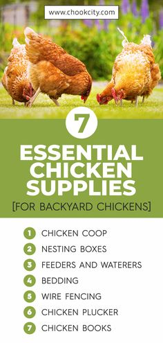 In this guide, we will talk about the main chicken supplies to buy in order to equip your coop with everything your birds will need. This way, you can be better prepared for welcoming your flock. Raising Backyard Chickens, Backyard Chicken Coops, Diy Chicken Coop, Chicken Facts, Chicken Life, Chicken Breeds For Eggs, Chicken Plucker, Chicken Feeders, Healty Dinner