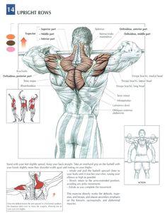 Deltiods(shoulders) & Upper Back #workout #gymaholic