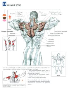 Deltiods(shoulders) Upper Back #workout #gymaholic Click for an AMAZING back workout!