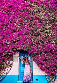#buganvilia #burgau #algarveportugal #algarvelovers #flowerpower🌸 #summerflowers Algarve, Flower Power, Travel Guide, Photo Ideas, Portugal, Viajes, Shots Ideas