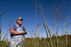"""""""A lot of people think this is a new thing, and it's not,"""" Jackson said. """"I would be willing to bet that most people drive by a switchgrass plant on their way to work every day."""" A Farmer in Tennessee being interviewed."""