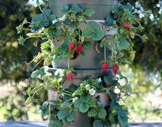 Torre de macetas para cultivar fresas | http://www.guiadejardineria.com/torre-de-macetas-para-cultivar-fresas/