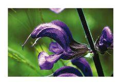 het resultaat van 35 jaar fotografie: Natuurmomenten van IVN-gids Jan Bos. ISBN: 9789077724170  http://www.drukkerijvanark.nl/  Permalink voor ingesloten afbeelding