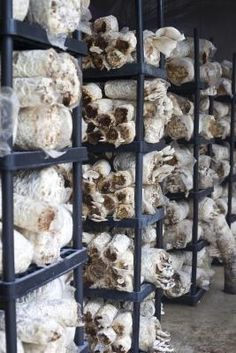 How to Grow Mushrooms as a Business