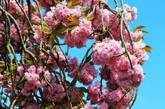 Be Gluten Free - Brighton : Easter Weekend Family BBQ (cherry blossom)