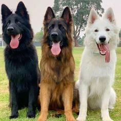 Dog Breeds Little .Dog Breeds Little Cute Funny Animals, Cute Baby Animals, Funny Dogs, Animals And Pets, Shepherd Puppies, German Shepherd Dogs, German Shepherds, Baby Huskys, Dog Breeds Little