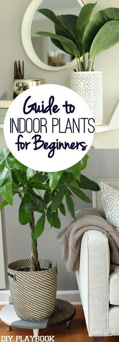 We have brown thumbs, but these indoor plants are pretty foolproof. Add some life and greenery to your space with these indoor plants.