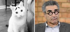 celebrities-and-their-animals-look-a-likes-3