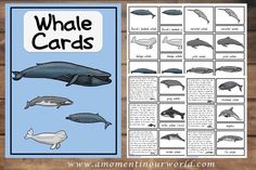 Whale Cards