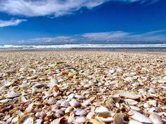 So many accumulated shells, at 'The Mount' - Tauranga, North Island East Coast, New Zealand