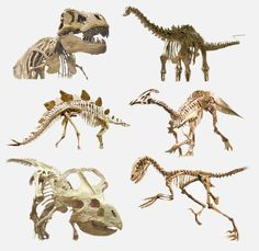 The Ten Biggest Dinosaur Mysteries We Have Yet to Solve Reptiles, Large Lizards, Deep Time, Dinosaur Images, Dinosaur Fossils, Extinct Animals, Beast, Mystery, Lion Sculpture