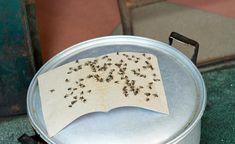 die besten 25 fliegenfalle selber bauen ideen auf pinterest fliegenfalle bauen fliegenfalle. Black Bedroom Furniture Sets. Home Design Ideas