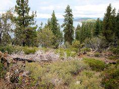DSC02814, South Lake Tahoe, Nevada, USA / http://www.sleeptahoe.com/dsc02814-south-lake-tahoe-nevada-usa/