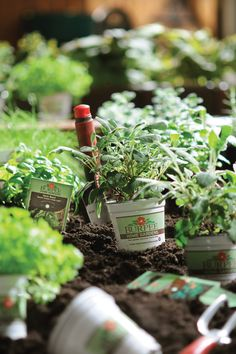 Create a garden that's uniquely your own with Burpee Garden-Ready Plants! Choose from a wide selection of hardy herbs and scrumptious vegetables.