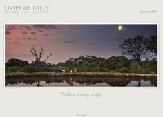 Leopard Hills: Flash Project Details by inMotion Graphics Private Games, Web Design, Graphic Design, Game Reserve, Graphics, Projects, Blue Prints, Charts, Visual Communication