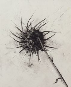 """Israel Hershberg, """"Thorn"""" Pencil on paper, 73 x 58 cm Pencil Art, Pencil Drawings, Art Drawings, Figure Drawings, Botanical Drawings, Botanical Art, Tinta China, Chef D Oeuvre, Art Graphique"""