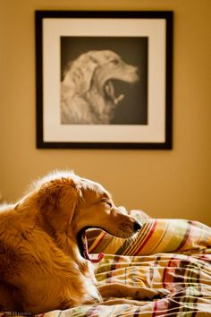 Life imitates art by Jill Maguire, via 500px; Yawns are so contagious!