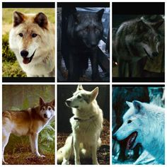 Summer, shaggy dog, grey wind, nymeria, lady, and ghost from game of thrones/asoif #gameofthrones