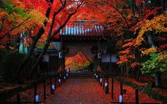 Komei temple in kyoto. Japanese Architecture, Architecture Design, Asia Travel, Japan Travel, Beautiful World, Beautiful Places, Kyoto Japan, Japanese Culture, Beautiful Landscapes